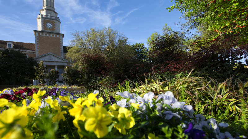Picturesque campus scene featuring blooming yellow flowers